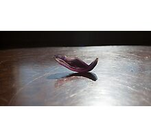 Yoga - Dhanurasana Photographic Print