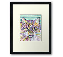 Maine Coon cat drawing - 2016 Framed Print