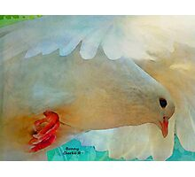 On the Wings of a Snow-White Dove  (All Proceeds Donated to Cancer Research) Photographic Print