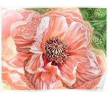Big Peach Poppy 2 Poster