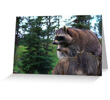 Im-paws-ably cute   Stanleigh and Friends Greeting Card