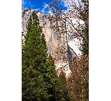 El Capitan hides behind Spring foliage in Yosemite Photographic Print