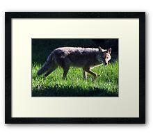 Iktomi Framed Print