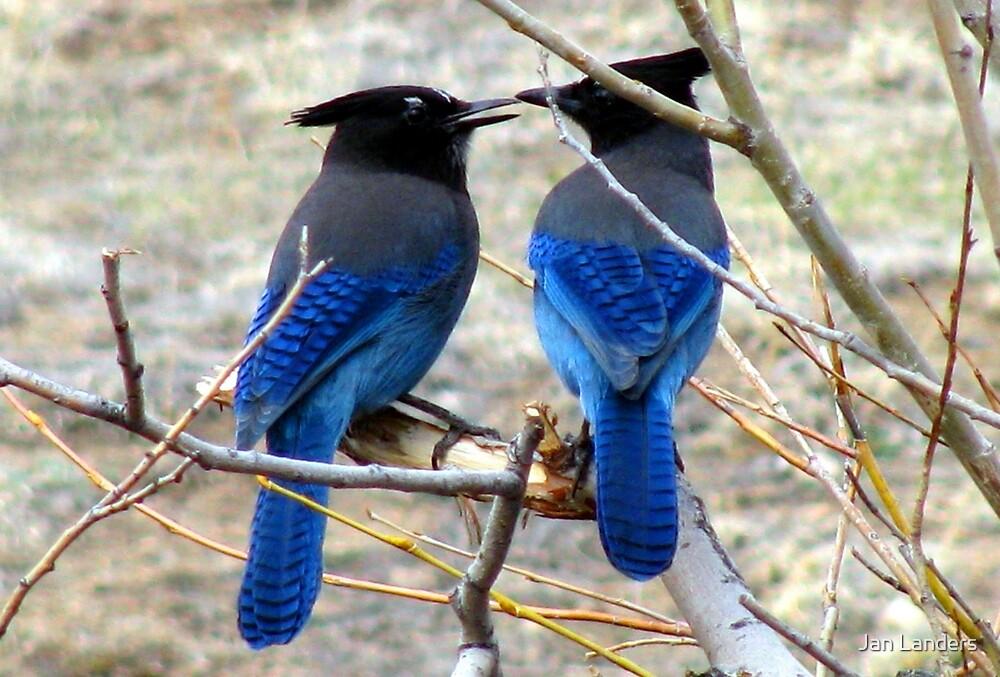 Blue Kiss by Jan Landers
