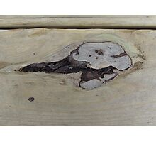 Whale of a Knothole Photographic Print