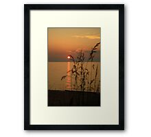 Glowing Grass Framed Print