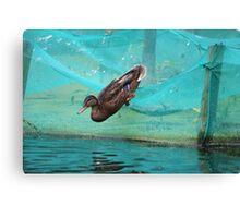 Dive! Dive! Dive! Canvas Print