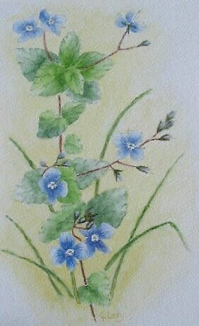 Alpine Flowers by Geraldine M Leahy