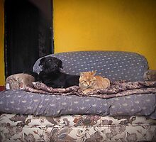 Like Cats and Dogs. by Maria  Gonzalez