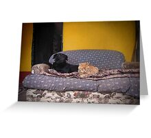 Like Cats and Dogs. Greeting Card