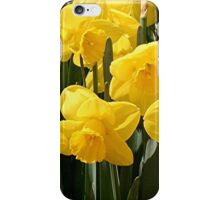 Yellow Daffodil flowers iPhone Case/Skin