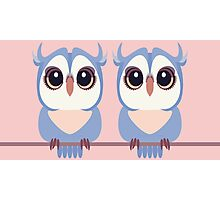 TWIN BLUE OWLETS Photographic Print