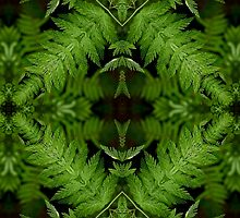 Forest Ferns by Kathy Weaver