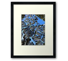 Treetops from Below Framed Print