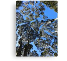 Treetops from Below Canvas Print