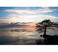 Tree Silhouette at Sunset Photographic Print
