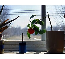 Pepper and sharpener Photographic Print