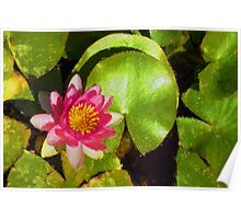 Pretty in Pink - a Waterlily Impression Poster