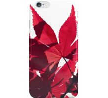 Red Maple Leaves - Oh Canada! iPhone Case/Skin