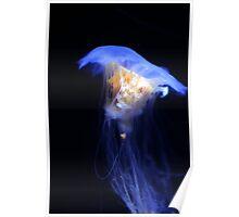 Jellyfish #3 Poster