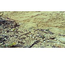 Textures of Earth Photographic Print
