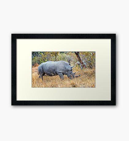 White Rhinoceros Framed Print