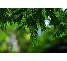 Green bokeh Photographic Print