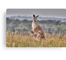 Kangaroo & Joey Canvas Print