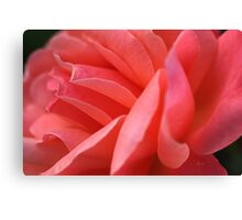 Shapes Of Rose  Canvas Print