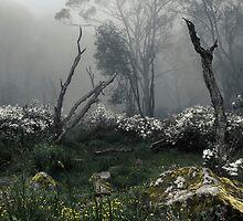 Fogscape by Andrew Paranavitana
