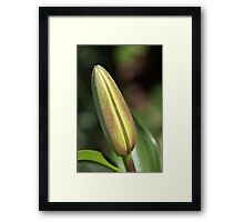 She Buds Then Flowers - Lily Bud Framed Print