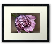 Daisy with Dew Drops Framed Print
