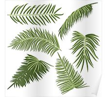 Green Palm Leaves Poster