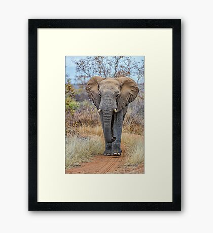African Savannah Elephant Framed Print