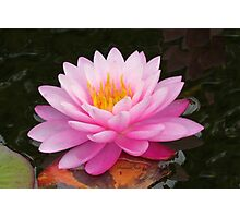 Beauty in the Water Garden Photographic Print