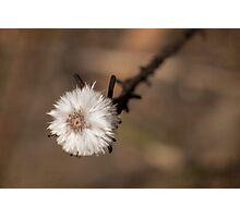 Dainty powder puff Photographic Print