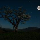 Moon Beams by Stephanie Hensley