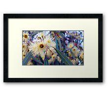 Eucalyptus Blossoms Framed Print