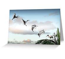 make way! (ibis landing sequence) Greeting Card