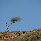 Windswept tree. by sandyprints
