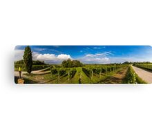 grapevine field in the italian countryside Canvas Print