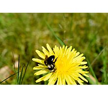 Bee In The Glen  Photographic Print