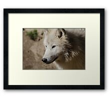 From the North - Arctic Wolf Framed Print