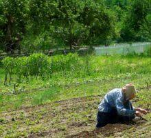 Woman Planting Garden Near Barn Sticker