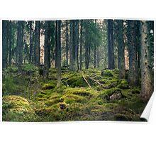 Primeval forest Poster