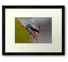 """ Bombardier Beetle "" Framed Print"