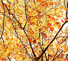 Branches and Leaves by Ms-Bexy