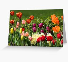 Tulips (landscape) Greeting Card