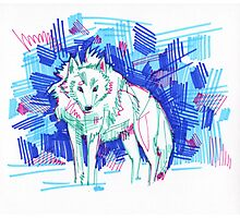Arctic wolf drawing - 2011 Photographic Print