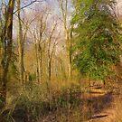 A Peaceful Walk by John Rivera
